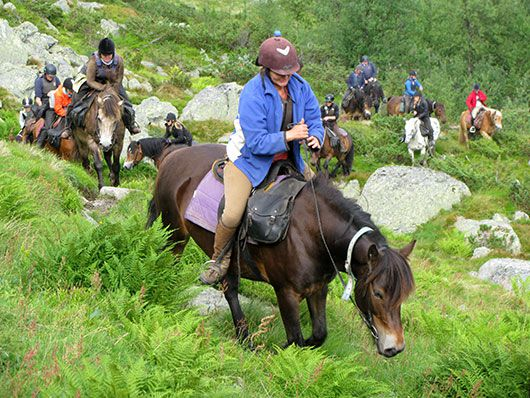 ridetur hesteryggen fjellet hester